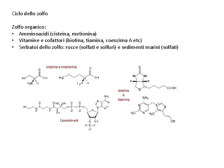 Ciclo dello zolfo Zolfo organico: • Amminoacidi (cisteina, metionina) • Vitamine e cofattori (biotina,