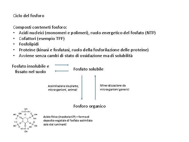 Ciclo del fosforo Composti conteneti fosforo: • Acidi nucleici (monomeri e polimeri), ruolo energetico