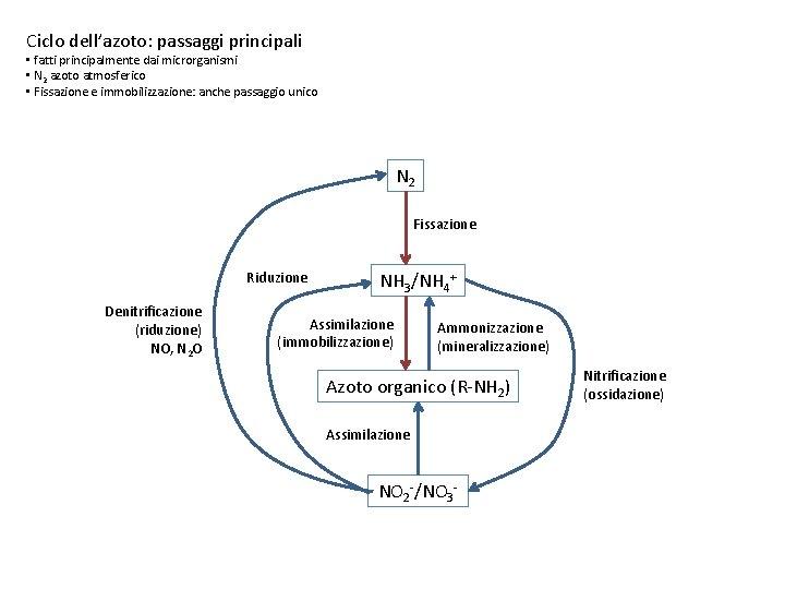 Ciclo dell'azoto: passaggi principali • fatti principalmente dai microrganismi • N 2 azoto atmosferico