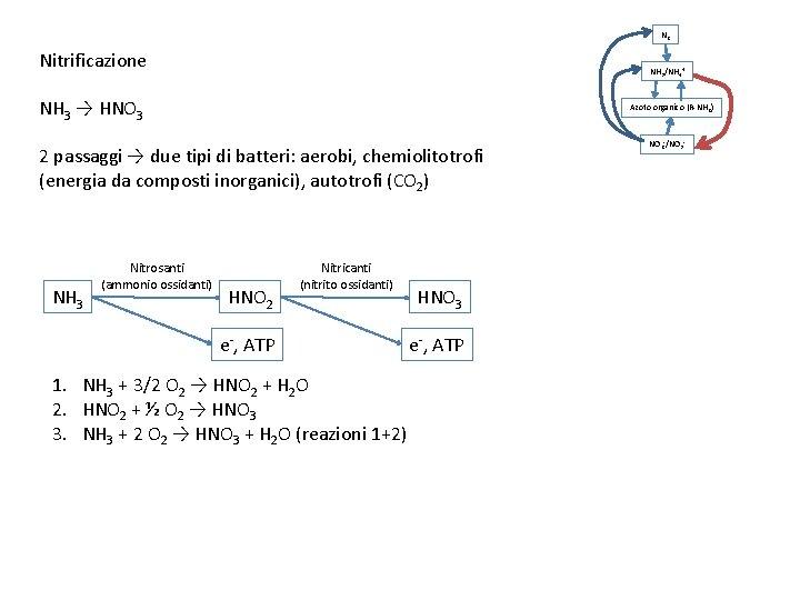 N 2 Nitrificazione NH 3/NH 4+ NH 3 → HNO 3 Azoto organico (R-NH