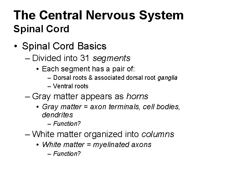 The Central Nervous System Spinal Cord • Spinal Cord Basics – Divided into 31
