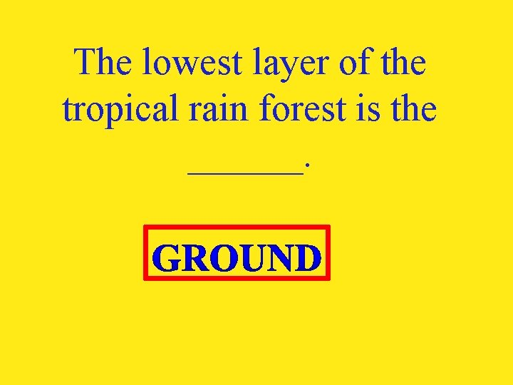 The lowest layer of the tropical rain forest is the ______.