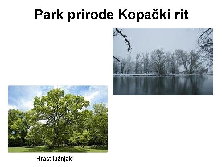 Park prirode Kopački rit Hrast lužnjak