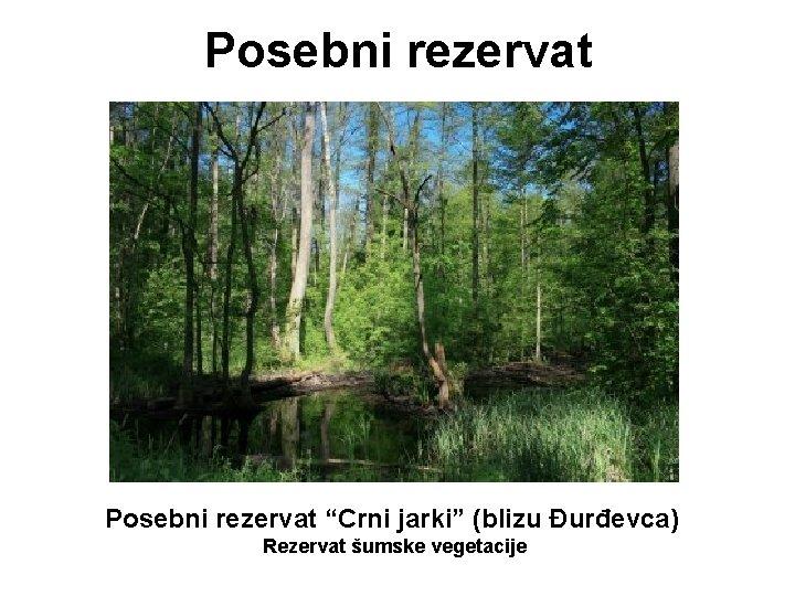 """Posebni rezervat """"Crni jarki"""" (blizu Đurđevca) Rezervat šumske vegetacije"""