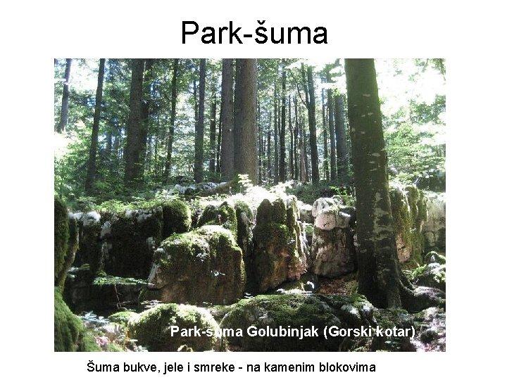 Park-šuma Golubinjak (Gorski kotar) Šuma bukve, jele i smreke - na kamenim blokovima