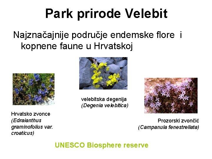 Park prirode Velebit Najznačajnije područje endemske flore i kopnene faune u Hrvatskoj velebitska degenija