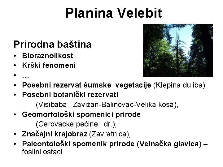 Planina Velebit Prirodna baština • • • Bioraznolikost Krški fenomeni … Posebni rezervat šumske