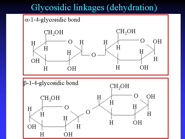 Glycosidic linkages (dehydration) a-1 -4 -glycosidic bond CH 2 OH H H OH H