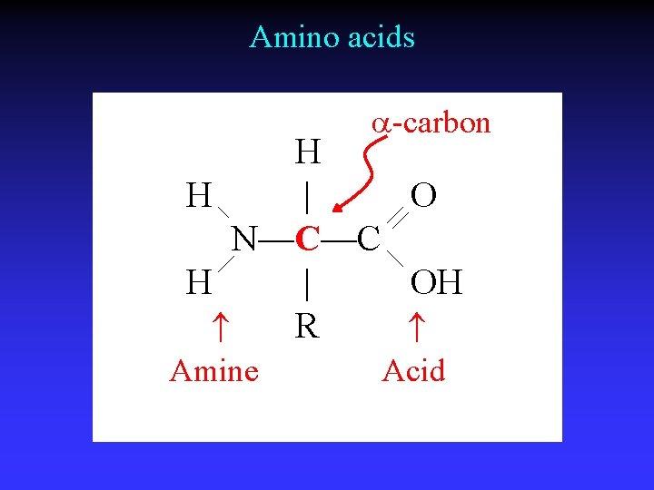 Amino acids a-carbon H H | O N—C—C H | OH R Amine Acid