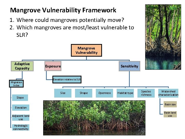 Mangrove Vulnerability Framework 1. Where could mangroves potentially move? 2. Which mangroves are most/least