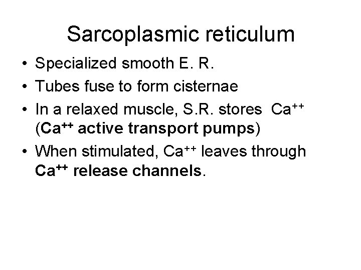 Sarcoplasmic reticulum • Specialized smooth E. R. • Tubes fuse to form cisternae •