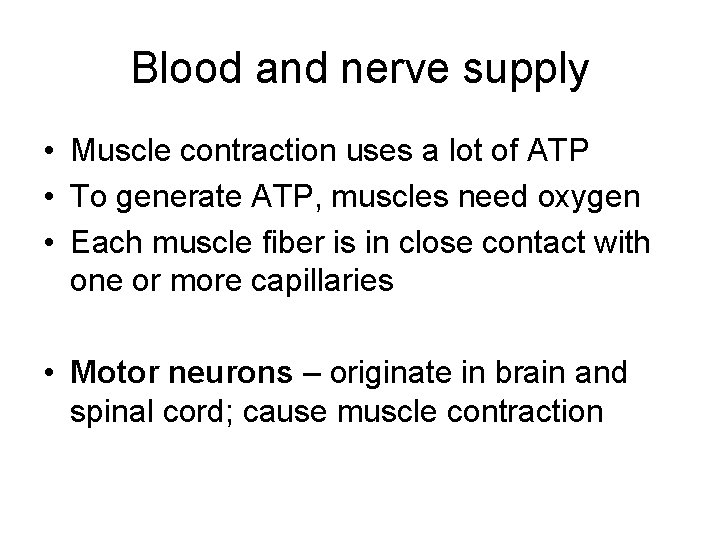 Blood and nerve supply • Muscle contraction uses a lot of ATP • To
