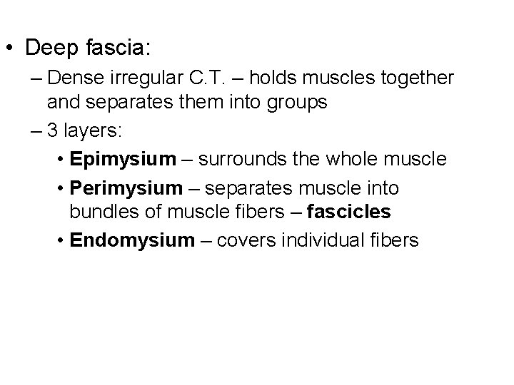 • Deep fascia: – Dense irregular C. T. – holds muscles together and