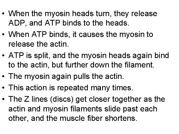 • When the myosin heads turn, they release ADP, and ATP binds to