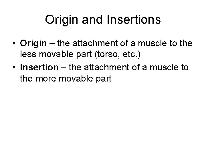 Origin and Insertions • Origin – the attachment of a muscle to the less