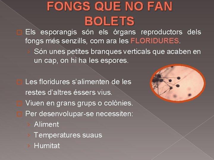 FONGS QUE NO FAN BOLETS � Els esporangis són els òrgans reproductors dels fongs