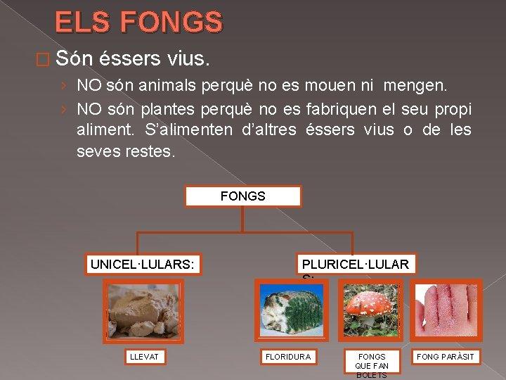ELS FONGS � Són éssers vius. › NO són animals perquè no es mouen