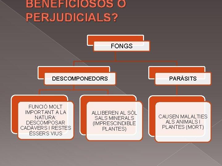 BENEFICIOSOS O PERJUDICIALS? FONGS DESCOMPONEDORS FUNCIÓ MOLT IMPORTANT A LA NATURA: DESCOMPOSAR CADÀVERS I