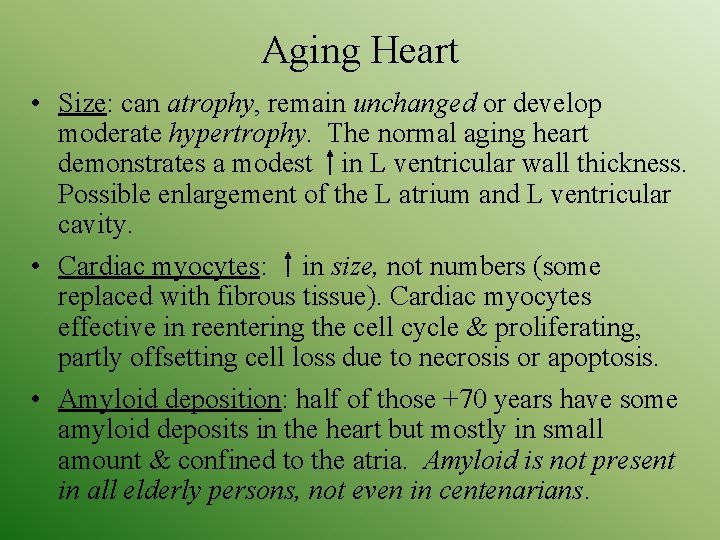 Aging Heart • Size: can atrophy, remain unchanged or develop moderate hypertrophy. The normal
