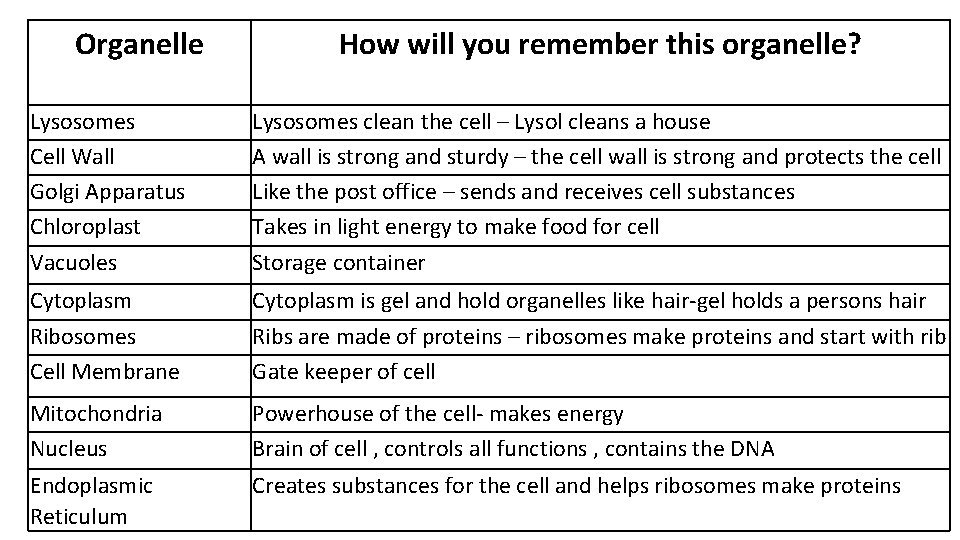 Organelle How will you remember this organelle? Lysosomes Cell Wall Golgi Apparatus Chloroplast Vacuoles