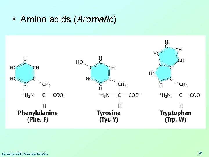 • Amino acids (Aromatic) Biochemistry 3070 – Amino Acids & Proteins 19