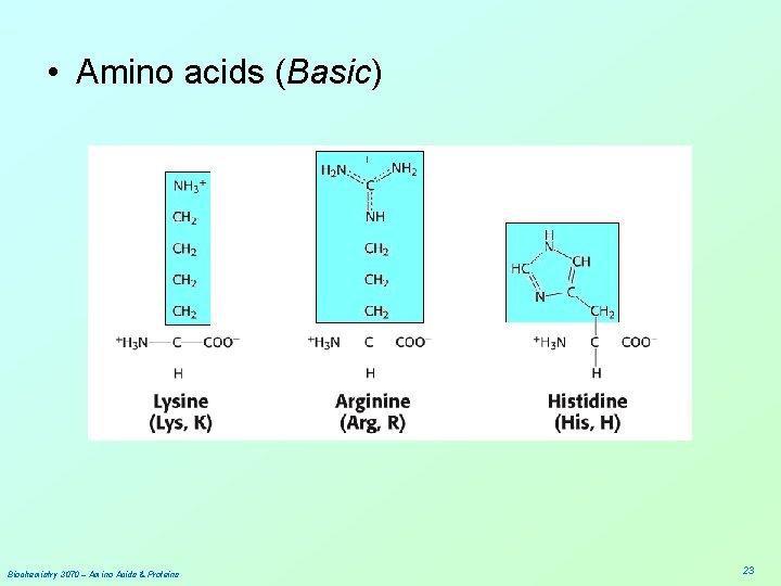 • Amino acids (Basic) Biochemistry 3070 – Amino Acids & Proteins 23