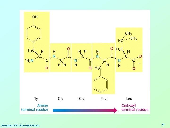 Biochemistry 3070 – Amino Acids & Proteins 30