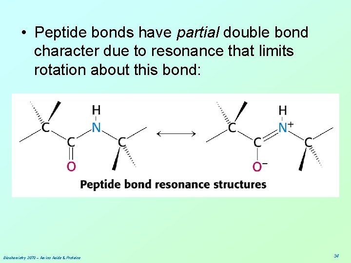 • Peptide bonds have partial double bond character due to resonance that limits