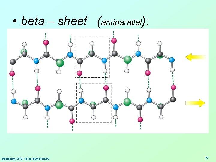 • beta – sheet (antiparallel): Biochemistry 3070 – Amino Acids & Proteins 40