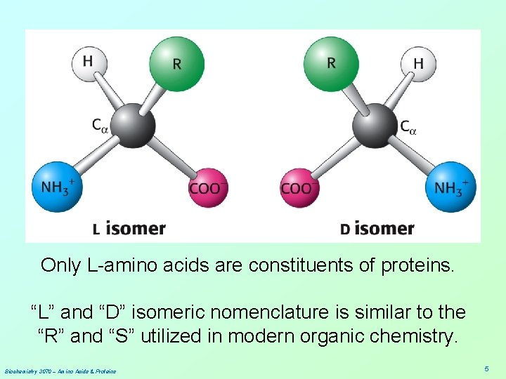 """Only L-amino acids are constituents of proteins. """"L"""" and """"D"""" isomeric nomenclature is similar"""