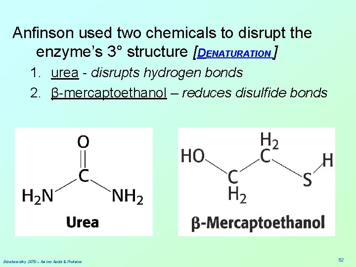 Anfinson used two chemicals to disrupt the enzyme's 3° structure [DENATURATION ] 1. urea