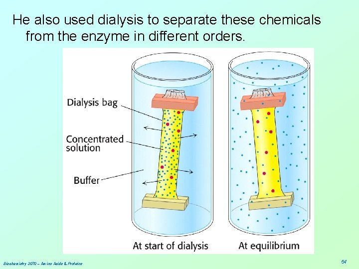 He also used dialysis to separate these chemicals from the enzyme in different orders.