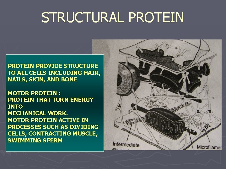 STRUCTURAL PROTEIN PROVIDE STRUCTURE TO ALL CELLS INCLUDING HAIR, NAILS, SKIN, AND BONE MOTOR