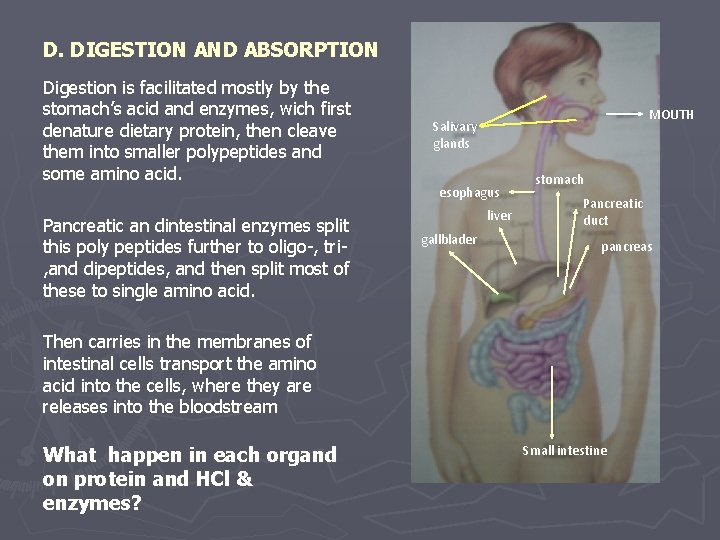D. DIGESTION AND ABSORPTION Digestion is facilitated mostly by the stomach's acid and enzymes,