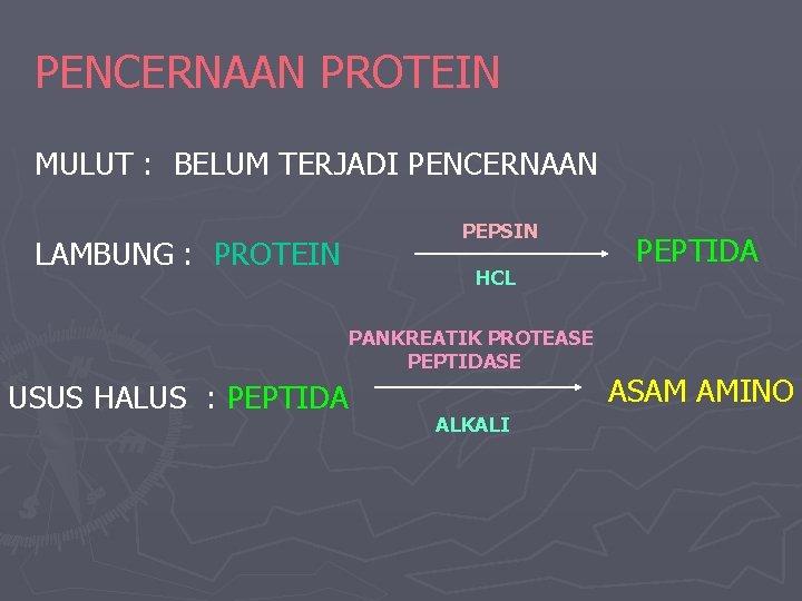 PENCERNAAN PROTEIN MULUT : BELUM TERJADI PENCERNAAN LAMBUNG : PROTEIN PEPSIN HCL PANKREATIK PROTEASE