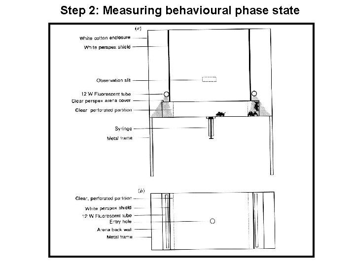 Step 2: Measuring behavioural phase state