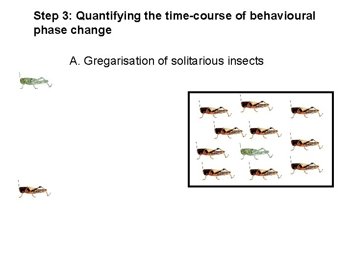 Step 3: Quantifying the time-course of behavioural phase change A. Gregarisation of solitarious insects