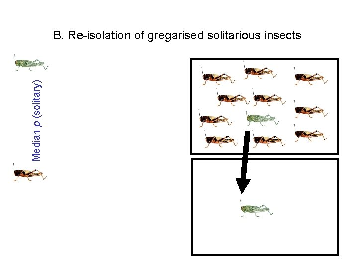 Median p (solitary) B. Re-isolation of gregarised solitarious insects