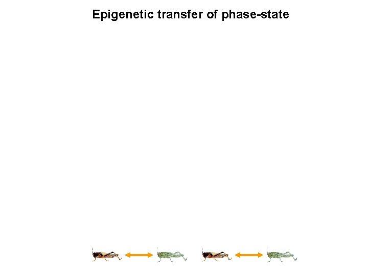 Epigenetic transfer of phase-state