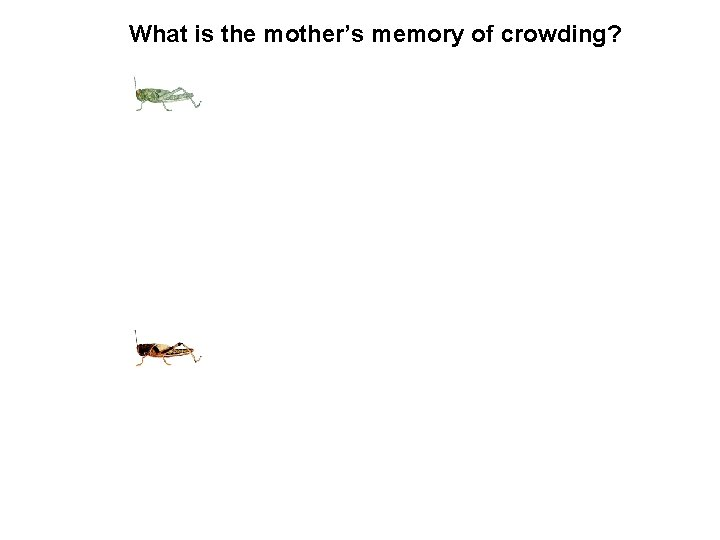 What is the mother's memory of crowding?