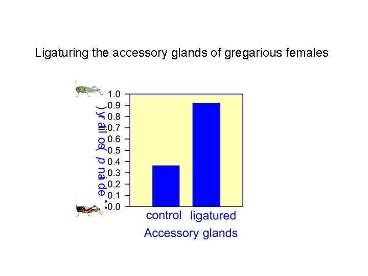 Ligaturing the accessory glands of gregarious females
