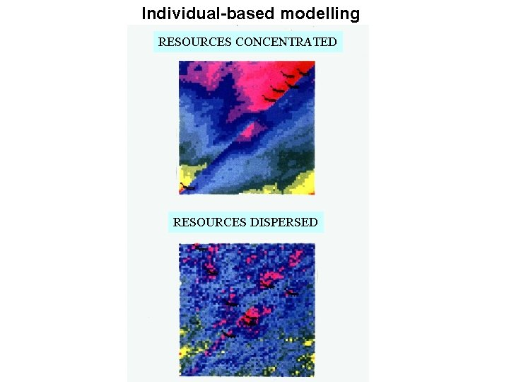 Individual-based modelling RESOURCES CONCENTRATED RESOURCES DISPERSED