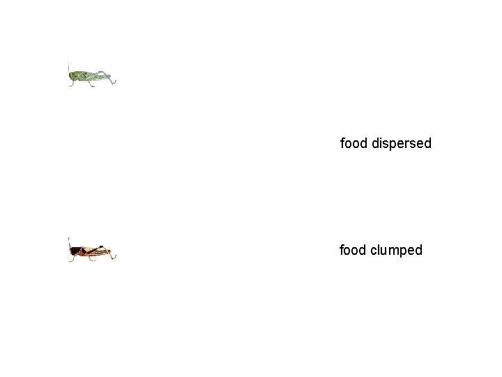 food dispersed food clumped