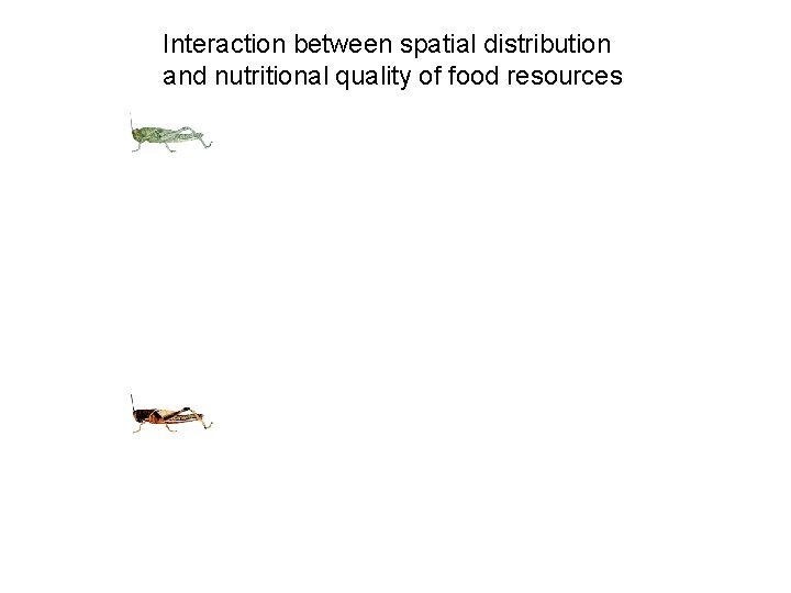 Interaction between spatial distribution and nutritional quality of food resources
