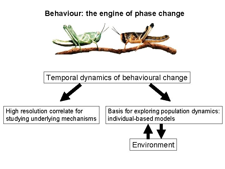 Behaviour: the engine of phase change Temporal dynamics of behavioural change High resolution correlate