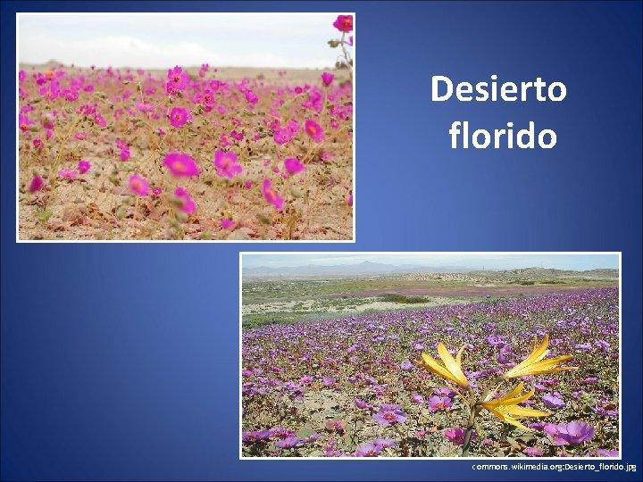 Desierto florido commons. wikimedia. org: Desierto_florido. jpg