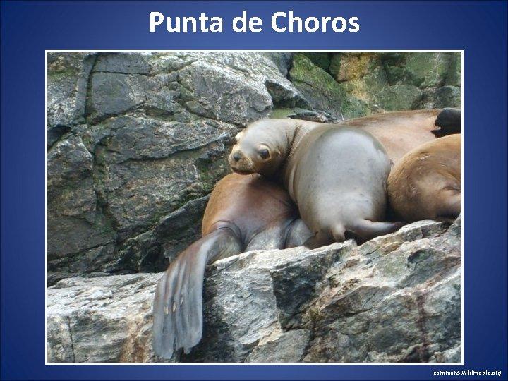 Punta de Choros commons. wikimedia. org