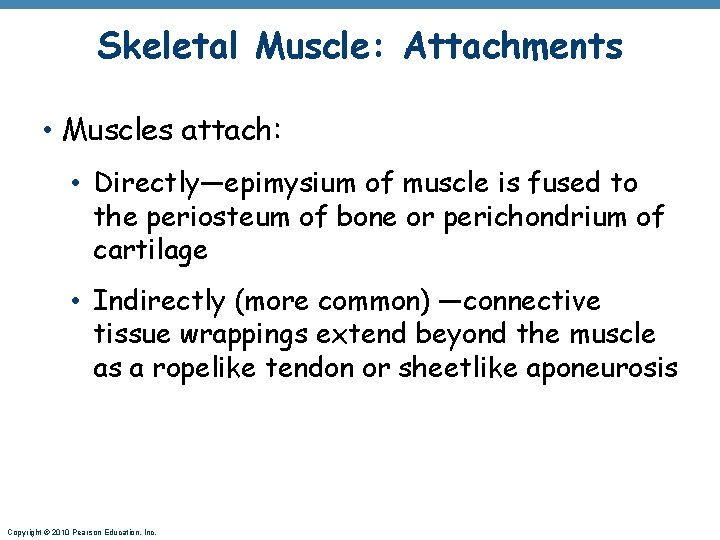 Skeletal Muscle: Attachments • Muscles attach: • Directly—epimysium of muscle is fused to the