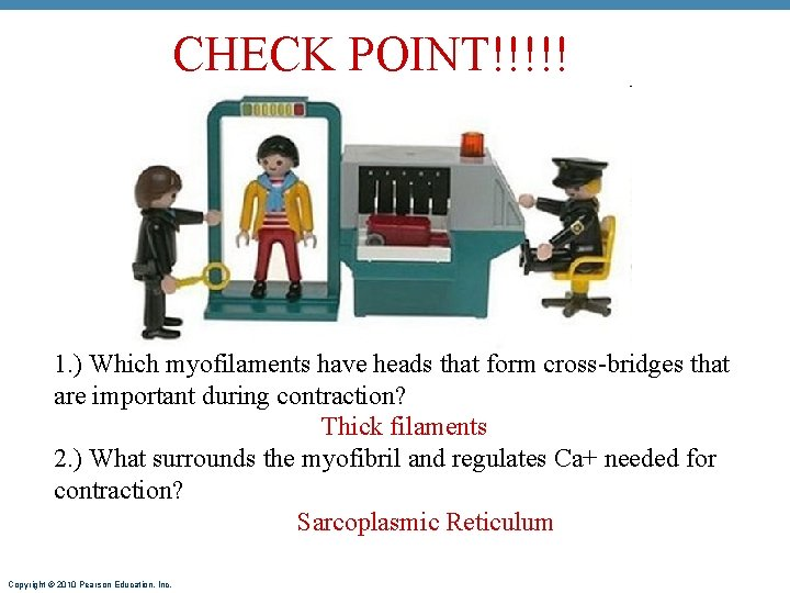 CHECK POINT!!!!! 1. ) Which myofilaments have heads that form cross-bridges that are important