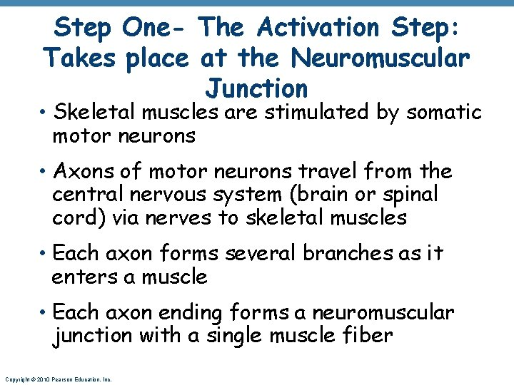Step One- The Activation Step: Takes place at the Neuromuscular Junction • Skeletal muscles
